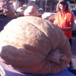 Champion Atlantic Giant Pumpkin www.shakeandgrow.com